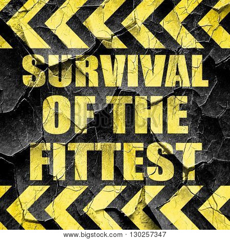 survival of the fittest, black and yellow rough hazard stripes