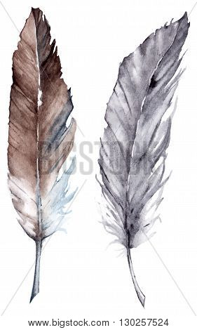 Watercolor gray grey brown feather vector set isolated