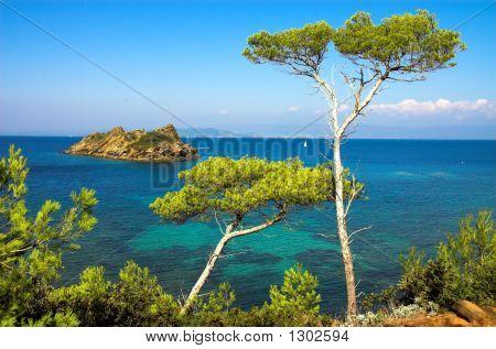 Landschaft mit Kiefern auf der Insel von der Cote Kurztrips