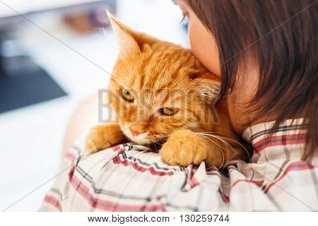 Man in shirt holding ginger cat. Funny pet looks angry.
