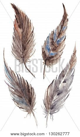 Watercolor brown gray grey feather set vector isolated
