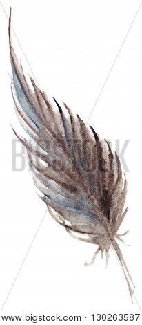 Watercolor brown gray grey single feather vector isolated