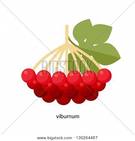 Branch of red viburnum with green leaf