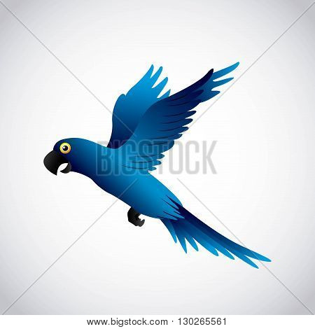 blue macaw design, vector illustration eps10 graphic