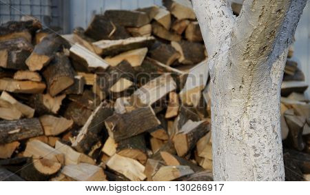 Chopped wood in stack texture background stock photo