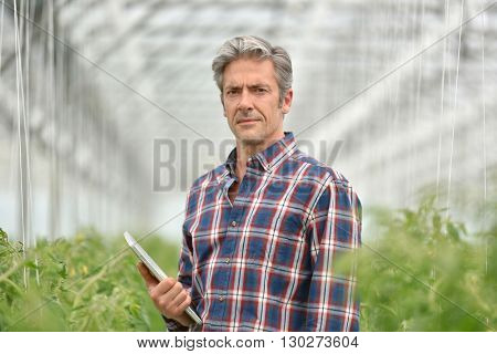Farmer with digital tablet standing in greenhouse
