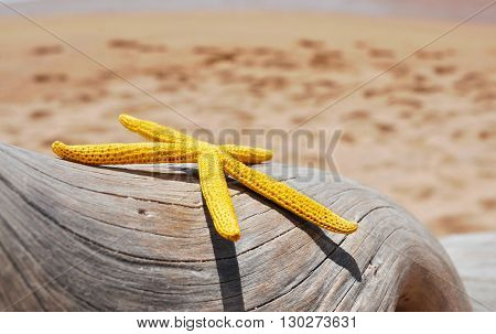 closeup of a yellow starfish on an old washed-out tree trunk on the beach, with the sand and the seashore in the background