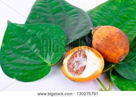 Betel nut and betel leaf on white background isolated