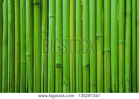 Green fresh bamboo fence wall texture background