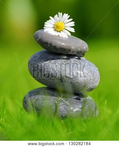 Stones and daisy in grass, soft focus. Spa concept