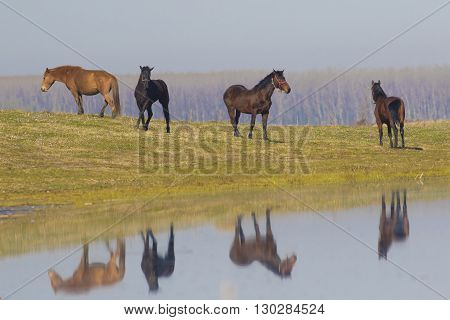 Herd of wild horses waist on meadow