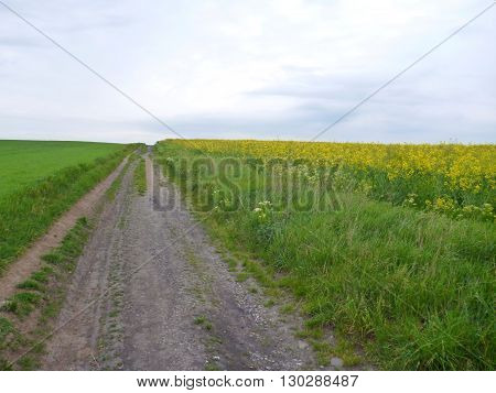 Dirt Road In The Green And Yellow Fields