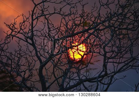 Fiery, haunting glowing sun through leafless tree and bushfire smoke.
