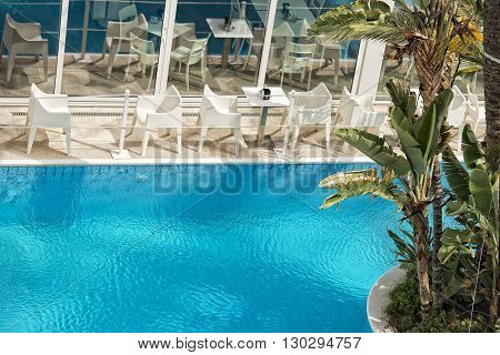 Pool Bar Coconut Palm Tree