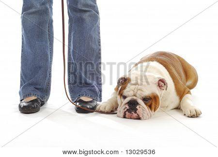 Dog Obedience Training