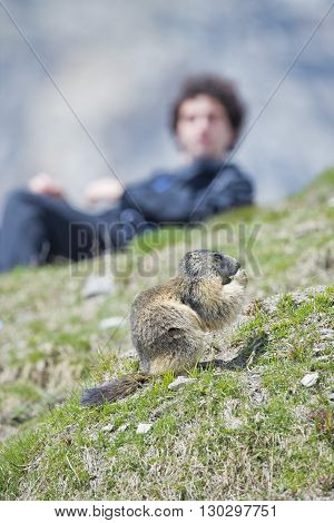 Isolated Marmot Sitting And Eating