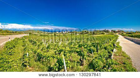 Island of Vis vineyards panorama Dalmatia Croatia