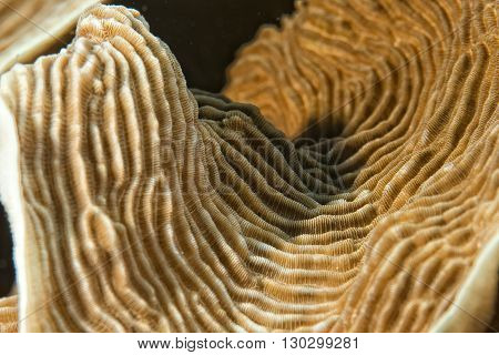 Hard Coral Macro Detail While Diving In Indonesia