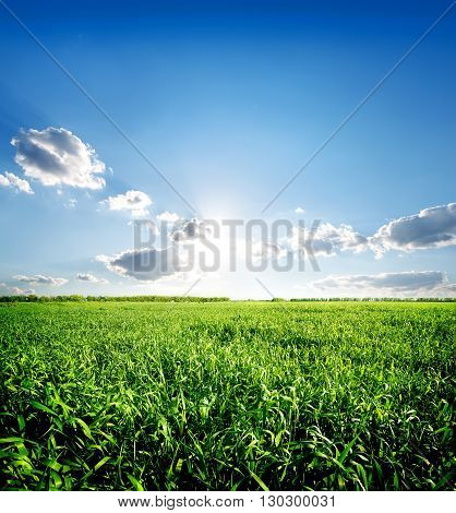 Green spring grass and blue sky with sun