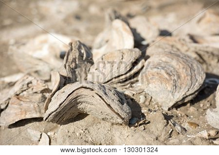 Billion Year Old Shells On The Beach