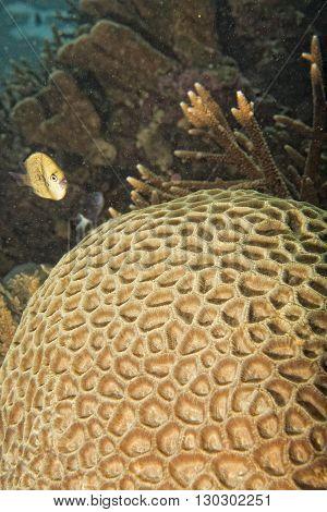 Hard Coral Detail