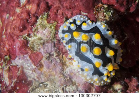 Colorful Nudibranch Portrait