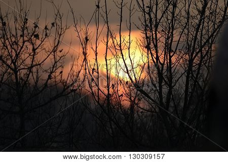 Beautiful sunset through tree branches view pano