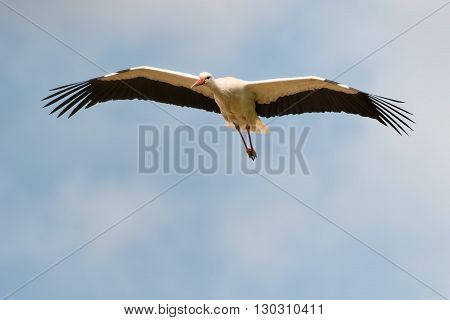 A Stork Fly To You In The Deep Blue Sky Background