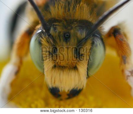 Bee Macro