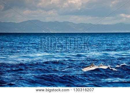 dolphin jumping outside the deep blue sea