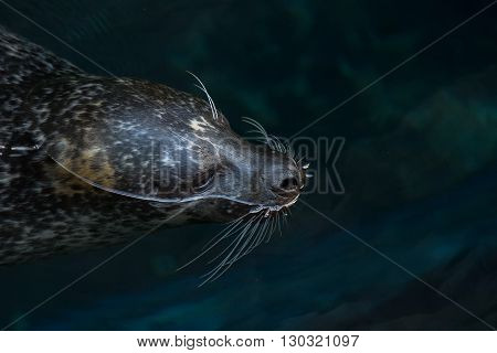 Monk Seal Relaxing On Surface