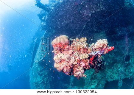 Corals On Ship Wreck