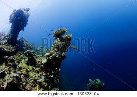 A Parrot Fish Near Ship Wreck In Red Sea