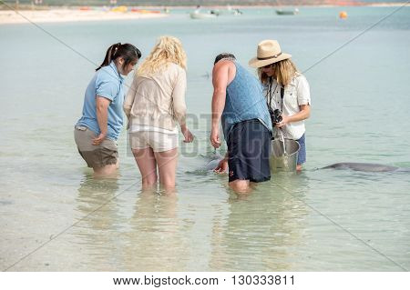 Monkey Mia, Australia - August, 28, 2015- Dolphins Near The Shore Get In Touch With Humans