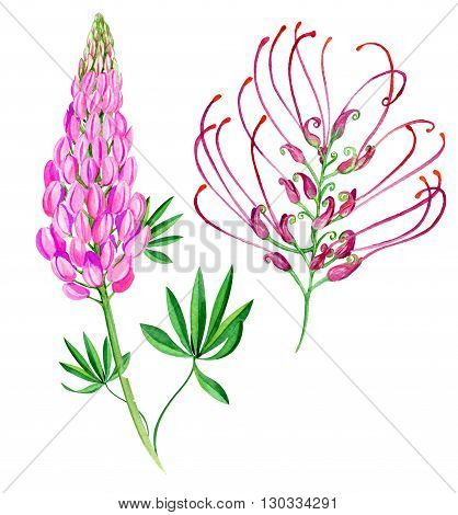 Lipin And Exotic Flower