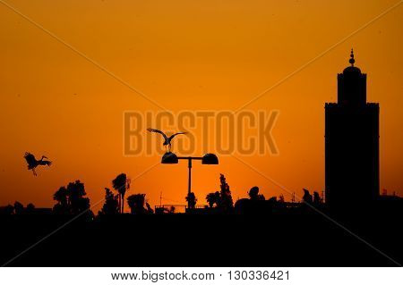 Maroc Marrakech Sunset View With A Stork Flying