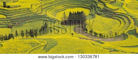 Panorama view of spring fresh landscape and colorful fields.