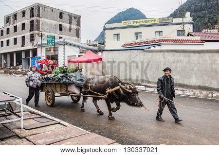 YUNNAN,CHINA - FEBRUARY 27,2016 :Asian farmer and buffalo in countryside of China