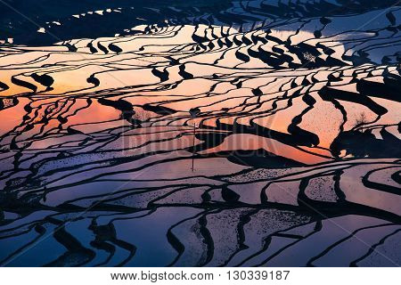 Colorful rice field terrace in China from aerial view