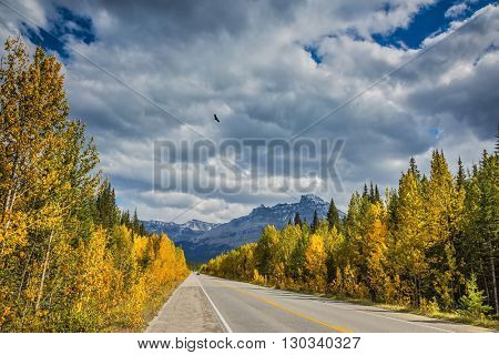 Travel to the Bow River Canyon in September.  Canadian Rockies, Great Banff. Excellent highway and surrounded by autumnal woods