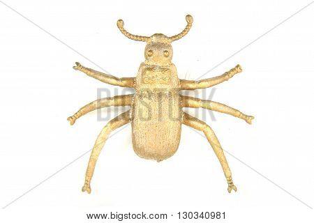 Nice Golden Beetle