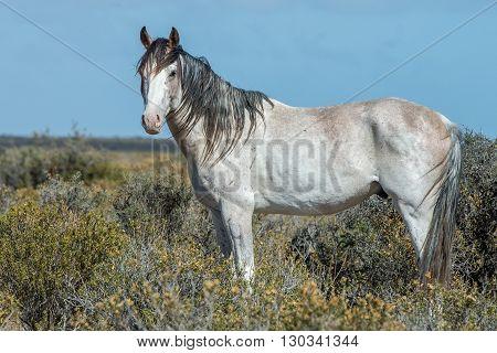 White Wild Horse On Blue Sky Background