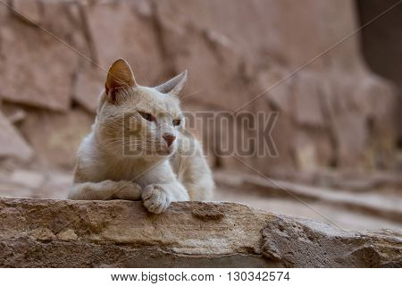 A Cat Relaxing In The Ruins Of Ait Benhaddou Maroc Location Of Gladiator Movie