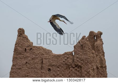 A Stork On Ait Ben Haddou