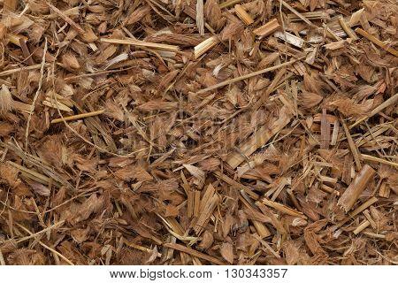 Organic Kyasuwa grass or deenanath grass (Pennisetum pedicellatum). Macro close up background texture. Top view.