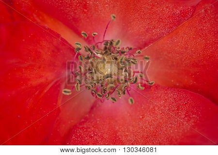 Flower Pistil Macro Detail