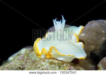 A Colorful Nudibranch On Hard Coral Macro In Cebu Philippines