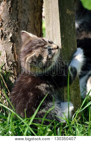 trying to climb young kitten on the tree