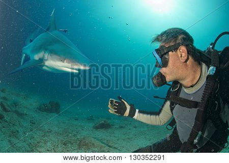 Underwater Selfie With Grey Shark Ready To Attack