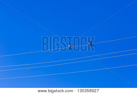 Swallows sitting on power lines on blue sky background. Birds on sky backgrounds